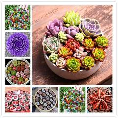 500pcs Fleshy Colorful Lithops plants Pseudotruncatella Succulentas Raw Stone Cactus bonsai Succulents Potted Flowers