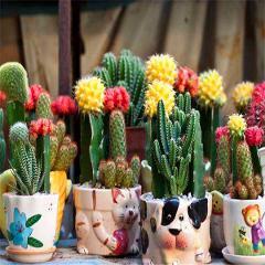 Cactus 500